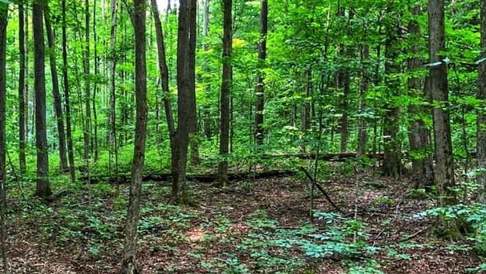 Mount Pleasant Summer Access 3