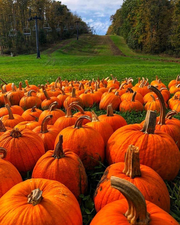 Fall Harvest Celebration at Mount Pleasant of Edinboro