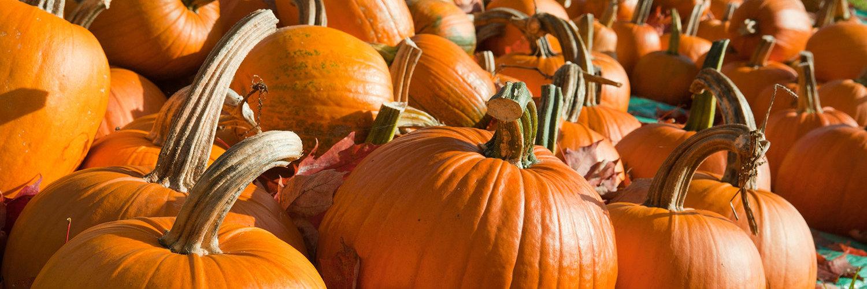 Fall Harvest Celebration - Pumpkins